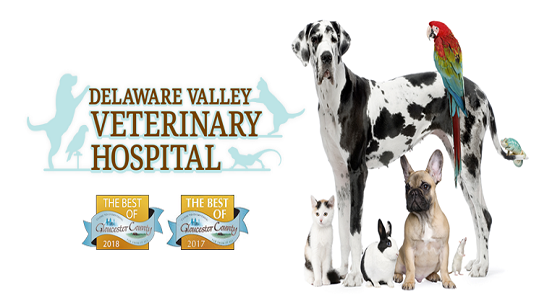 Delaware Valley Veterinary Hospital Card